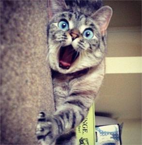 gato con cara de susto