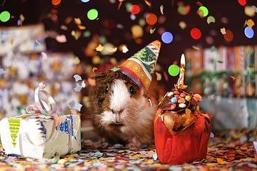 aniversario raton